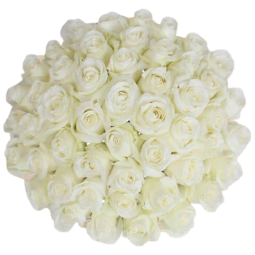 Bulk White Roses 96 Stems