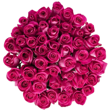 Bulk Hot Pink Roses 96 Stems