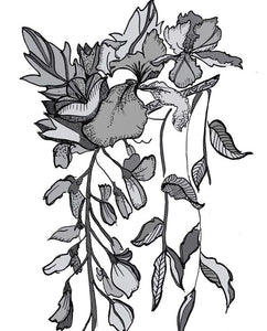 Claudia Campero - Botanical Illustrations - Ink on Paper