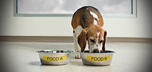 DOG FOOD REVIEWS: INTRODUCTION