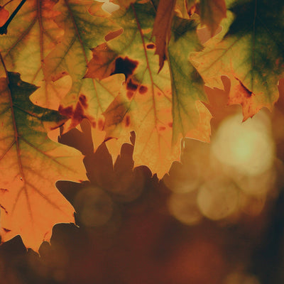 The first day of autumn - The time of Mabon