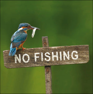 Kingfisher - No Fishing!