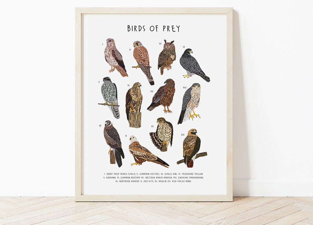Birds of Prey Print