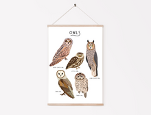 Load image into Gallery viewer, Owl Print