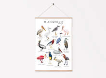 Load image into Gallery viewer, Pelican Print