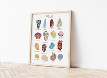 Load image into Gallery viewer, Sea Shells Print