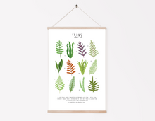 Load image into Gallery viewer, Types of Ferns Print
