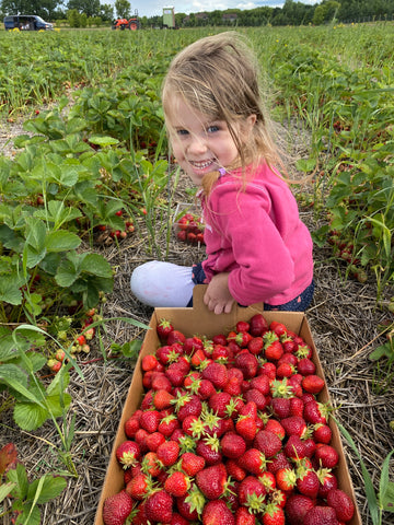 Sprouted Planner Strawberries