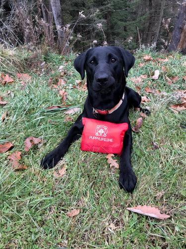 Doggy First Aid Kit - The Sportsman's Doctor