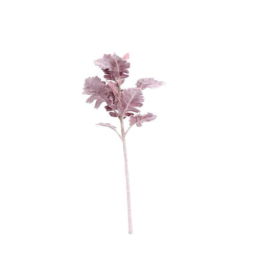 Dusty Miller Red Foliage