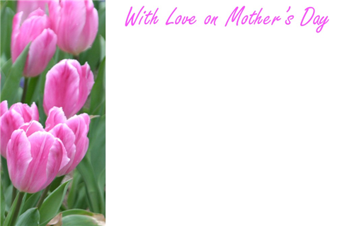 50 x Happy Mothers Day Greeting Card - Tulip Pink Decoration Floral Design