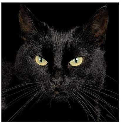 broderie diamant chat noir