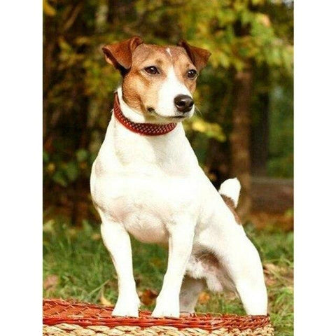 Broderie Diamant Chien Jack Russel