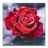 broderie diamant rose rouge