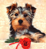 Broderie Diamant Yorkshire Terrier