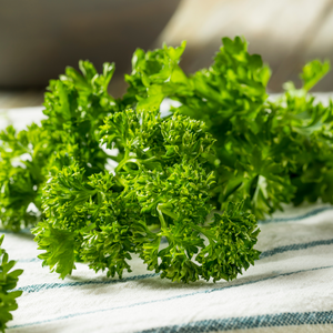 Growing Curly Parsley