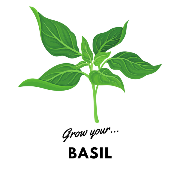 Grow Your Basil: Organic Seeds - Mucky Knees Gift Boutique