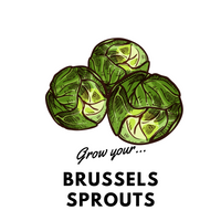 Grow Your Brussels Sprouts: Organic Seeds - Mucky Knees Gift Boutique