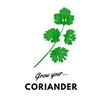 Grow Your Coriander: Organic Seeds - Mucky Knees Gift Boutique