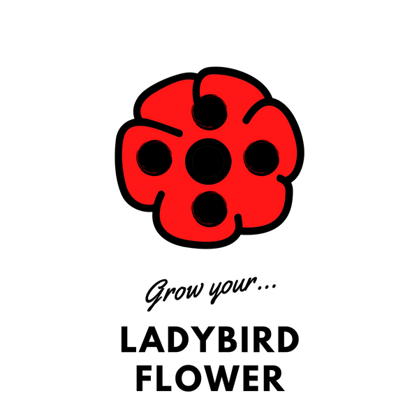 Grow Your Ladybird Flower: Seeds - Mucky Knees Gift Boutique