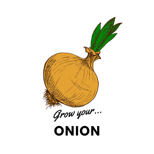 Grow Your Onion: Organic Seeds - Mucky Knees Gift Boutique