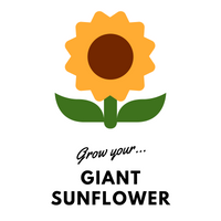 Grow Your Giant Sunflower: Seeds - Mucky Knees Gift Boutique