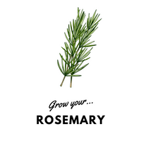 Grow Your Rosemary: Organic Seeds - Mucky Knees Gift Boutique