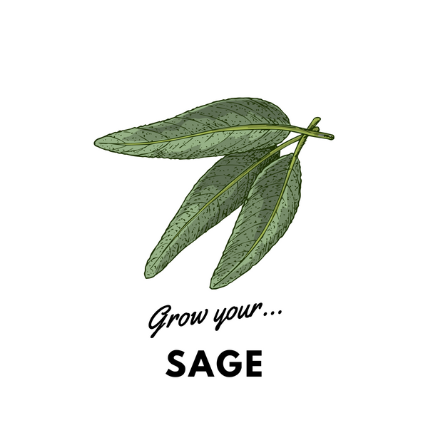 Grow Your Sage: Organic Seeds - Mucky Knees Gift Boutique
