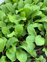 Load image into Gallery viewer, Greens - Arugula - 4 oz. bag