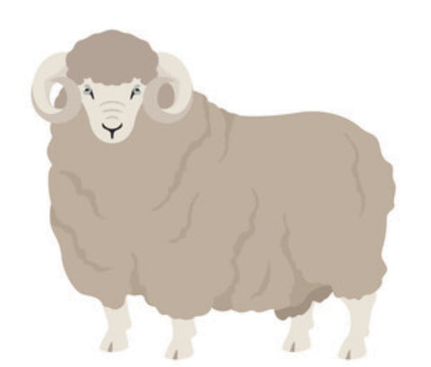 Illustration of Rambouillet Sheep