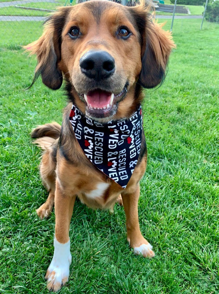 """Rescued and Loved"" Bandana"