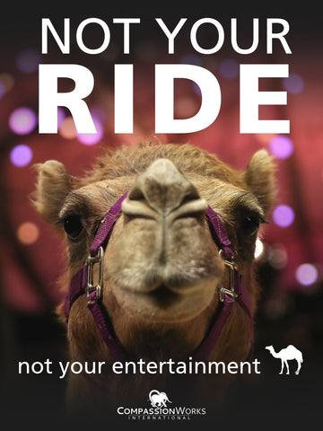 Camel Not Your Ride Protest Poster