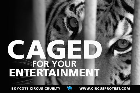 Caged For Your Entertainment protest poster