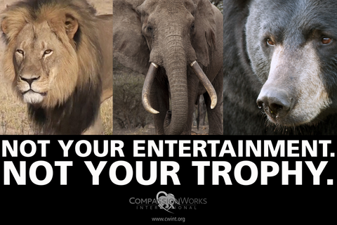 Not Your Trophy protest poster