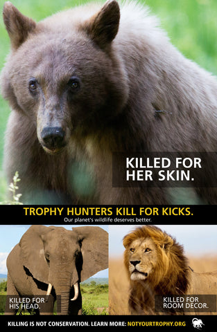 Anti-trophy hunting leaflet (100 pack)