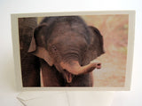 Elephant Boxed Card Set of 8