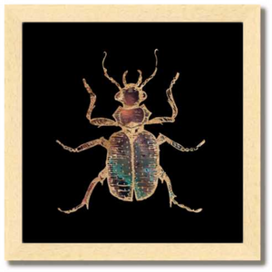 10 inch square Gold Foil Galactic Hunter Beetle Fine Art Print by Aimee Schreiber, galaxy gold leaf ink with natural maple wood frame