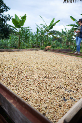 Colombia Gran Galope Tolima Green Coffee Beans