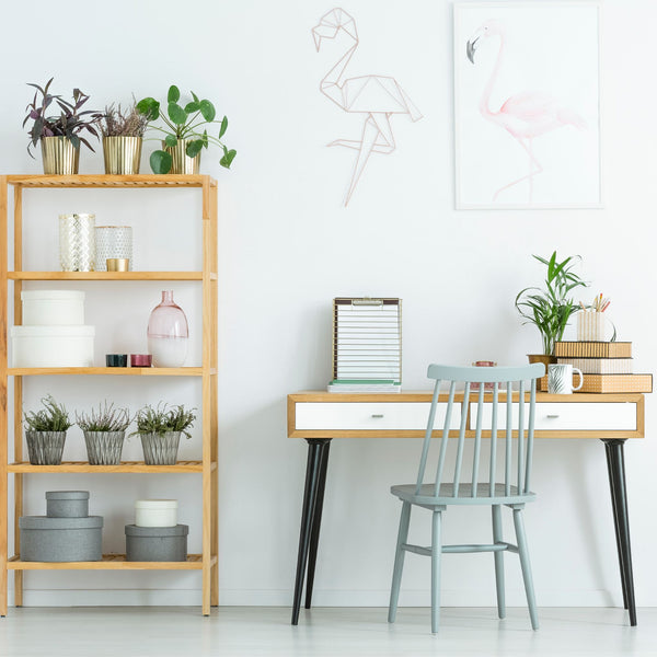 Decorating Your Office with Plants