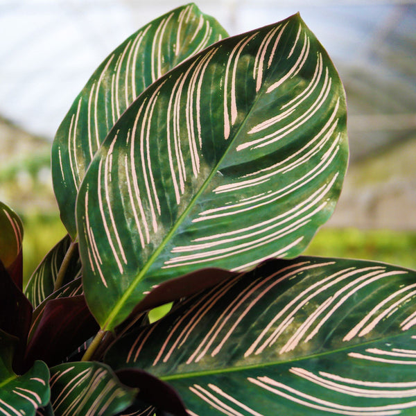 House Plants: Low, Medium, and Bright Light
