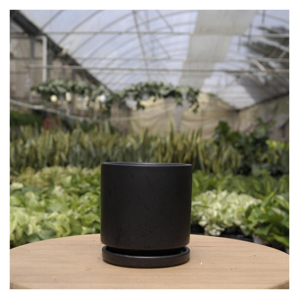 Cylinder Planter & Tray Cylinder Planter & Tray - Cellar Door PlantsHome & Garden House Plant Shop Black