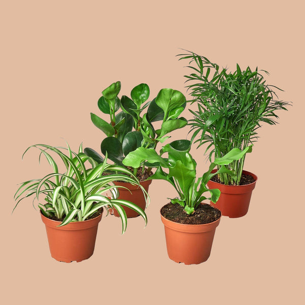 "Furry Friends Bundle 6"" Plant House Plant Shop"