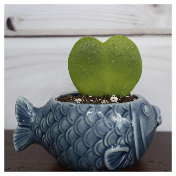 Minnow Planter Minnow Planter - Cellar Door Plants House Plant Shop Fish
