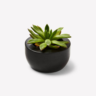 Dark Gray Concrete Succulent Pot