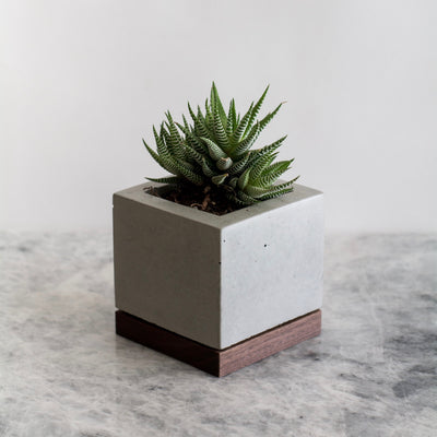 KOMOLAB Concrete and Wood Planter (Front) with A Succulent