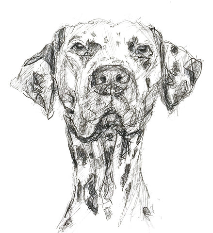 Quirky pet portraits. Cool pet art. Unique messy style pet drawings. Signed original pen and ink drawing of your pe