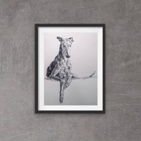 Cool greyhound - Unique messy style sighthound drawing. This pen and ink print of a sighthound reclining