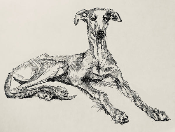 Cool greyhound art - quirky pen and ink print of a greyhound. With its unique messy style, this pen and ink print of a sighthound reclining