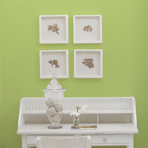 DG Sample Lime Tree No. 96 Paint