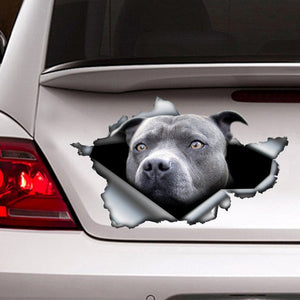 Blue pitbull BMA770 car sticker